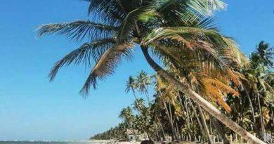 Praia dos Carneiros: o que fazer, dicas, hospedagens e passeios